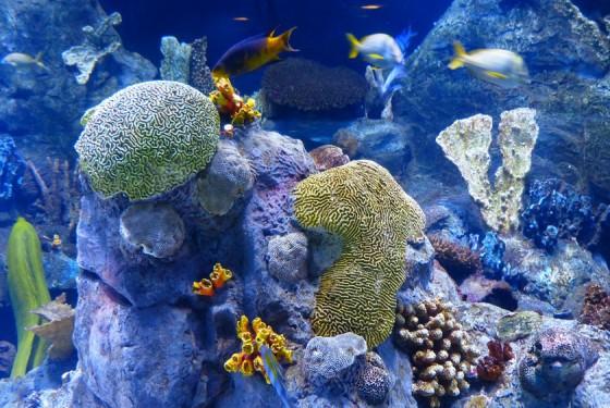 Underwater image of algae in Two Oceans Aquarium in Cape Town