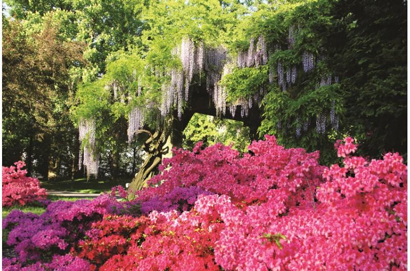 ... Brooklyn Botanic Garden Bunte Blumen