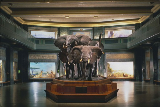 American Museum of Natural History Akeley Hall
