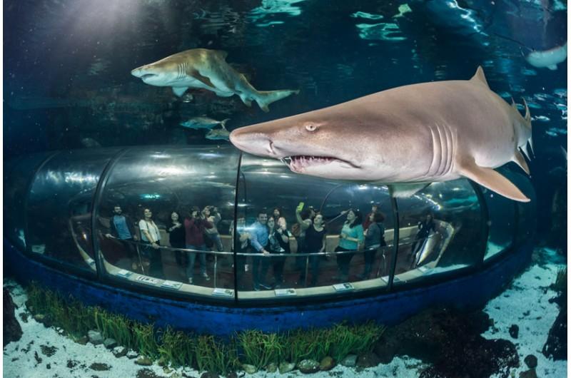 Aquarium haie bildschirmschoner braunschweig for Aquarium de barcelona